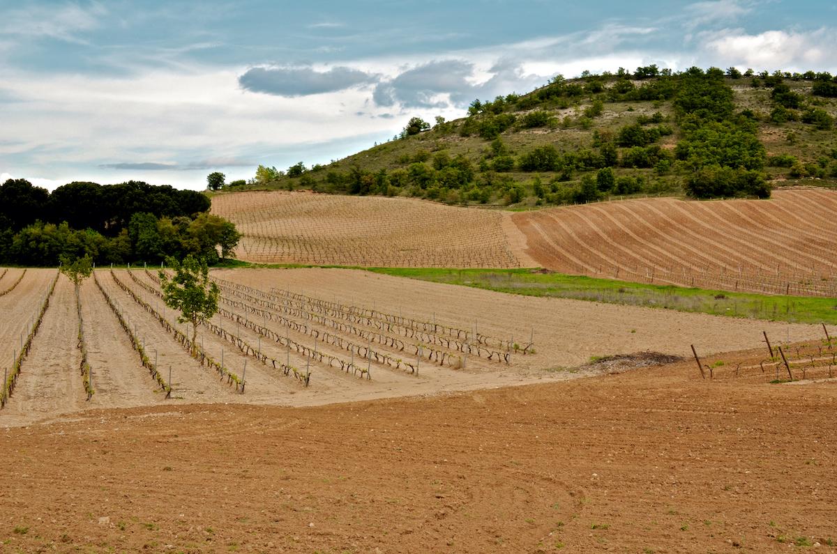 Campos de vino ubicados en la ladera