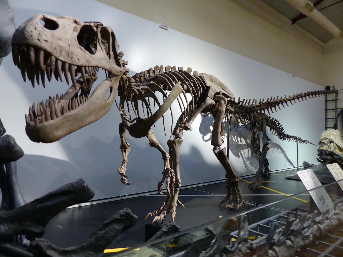 Gran esqueleto de dinosaurio expuesto en el Museo Nacional de Ciencias Naturales de Madrid